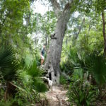 boy climbing on tree in the new orleans bayou