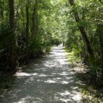 walking down the new orleans bayou path