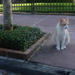 stray cat on the street in New Orleans